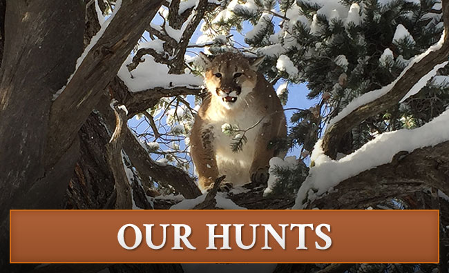 Canyon Rim Outfitters Colorado Hunts