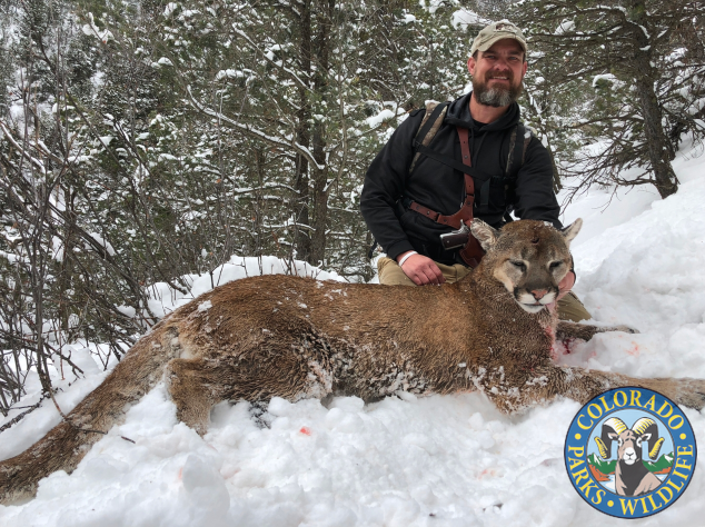 Requirements for Hunting Mountain Lion in Colorado
